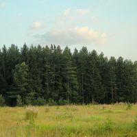 Лес у Крюково, Крюково