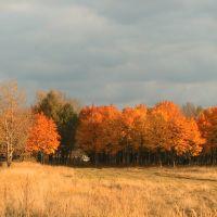 Осенние клены, Крюково