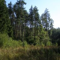 Лес, Крюково