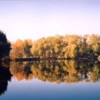 Золотая осень. Старый пруд., Купавна