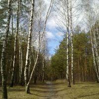 Парк Бабкина Дача весной., Купавна