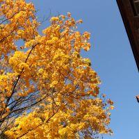 Осень в Куровской, Куровское