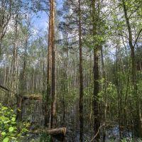 водная растительность, Куровское