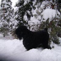Зима 2011., Лесной Городок