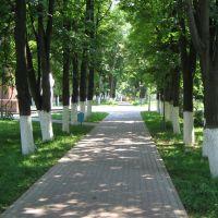 Дорожка в сквере / Path in Square, Лотошино