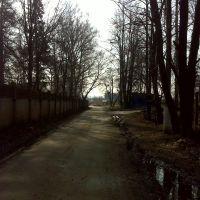 Дорога в поселке Авангард, Лукино