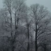 Ноябрьские заморозки., Львовский