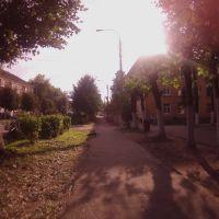 Кот перебежал дорогу, Львовский