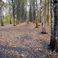 Наташинский парк, Люберцы