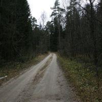 Дорога через лес (Лычево-Барково)_2, Михайловское