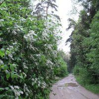 Лесная дорога на Лычёво, Михайловское
