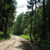 Дорога Лычёво-Барково в лесу, Михайловское
