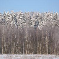 Зимние леса, Михайловское