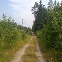 Полевая дорога, Михайловское