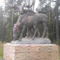 Лось с лосихой на Горьковском шоссе, Монино