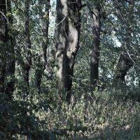 Остатки липового пейзажного парка в усадьбе Муханово, Муханово