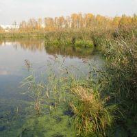 Озеро осенью, Нахабино