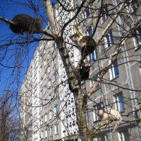 Дом №18. Весна 2008г., Некрасовка