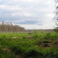 Лес сгорел., Некрасовка