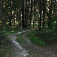 Лесная дорога, Некрасовка