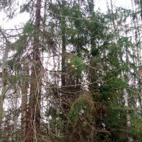 Коробята. Яблоки в лесу., Некрасовка