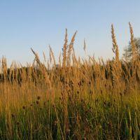 Meadow, Новобратцевский