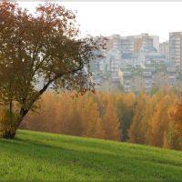 Fall in Mitino, Moscow, Новобратцевский