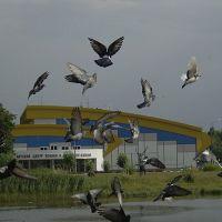 Ледовый дворец, Одинцово