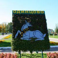 Odintsovo emblem, Одинцово