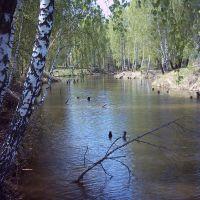 Платный пруд в Никитском. Вид 4., Ожерелье