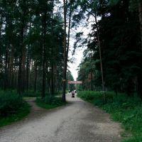 Начало пешеходной тропы через Томилинский лесопарк, Октябрьский