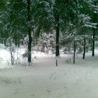 Лес в опалихе, Опалиха
