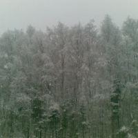 Лес у платформы Аникеевка, Опалиха