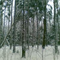 В лесу близ платформы Опалиха, Опалиха