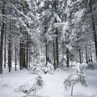Winter trees, Опалиха