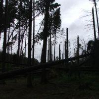 Ураган в мае 2009-го, Опалиха