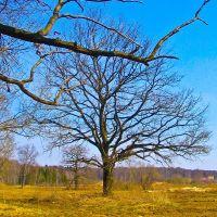 В память о дереве которого больше нет., Пироговский