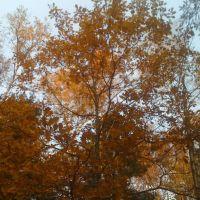 Осень в лесу, Пироговский