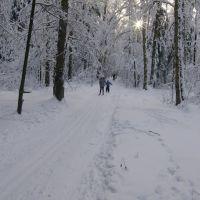 лыжня от мытищ, Пироговский
