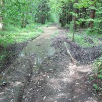 Превращение Пироговского лесопарка в болото, Пироговский