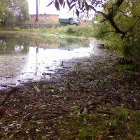 грязный пруд  в дер.Масюгино, Полушкино