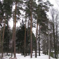 опушка леса около ул. 1 Проектная, Правдинский