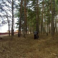 """В лесу около КП """"Волшебная страна"""", Пролетарский"""