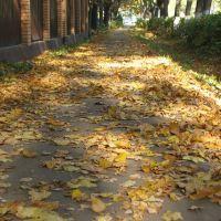 Deciduous leaves / Опавшая листва, Пушкино
