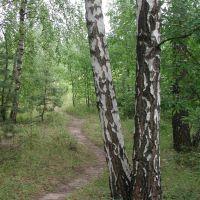 Quiet forest, Пущино