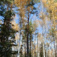 Осень в Мещёре, Радовицкий