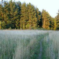 Дорога в лес, Решетниково