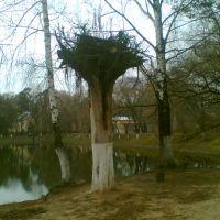 Дерево поставленное вверх корнями))), Родники