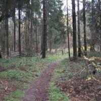 Лес в Родниках, Родники