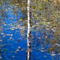 Лесной пруд, Софрино